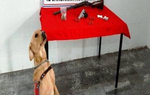 Biga'da uyuşturucu operasyonu: 2 gözaltı