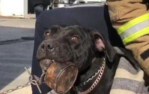 Dili konverse kutusuna sıkışan yavru köpeği itfaiyeciler kurtardı