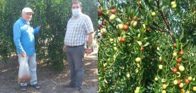 """Son günlerde ismini fazlaca duyduğumuz bir meyve; """"hünnap""""."""