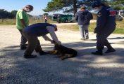 Biga'da 4 köpek zehirlenerek öldürüldü