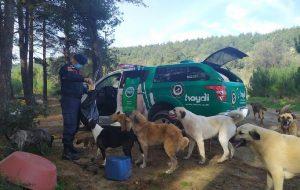Jandarma'dan sokak hayvanlarına yardım eli